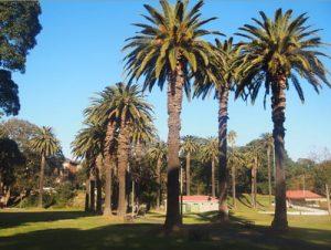 Canary Island Date Palm Avenue (photo: Asa Wahlquist)