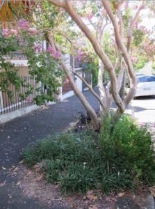 Street planting, Lombard St (image: Jan Wilson