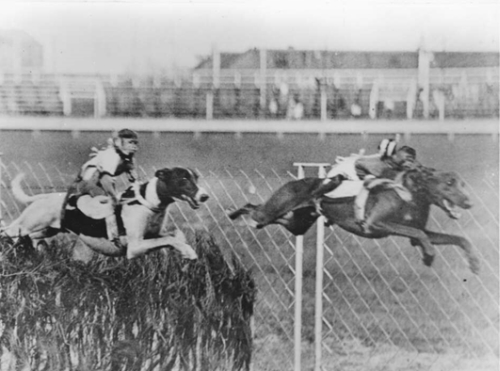 Monkeys ride on the backs of greyhounds as they jump the hurdles at Shepherds Bush Greyhound track, Mascot, Sydney, 1928 (Image: George McQuillan, http://nla.gov.au/)