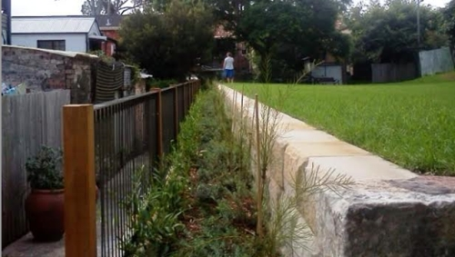 The thriving native flora planted along the new retaining wall in John Street Reserve (image: Friends of John Street Reserve Inc).