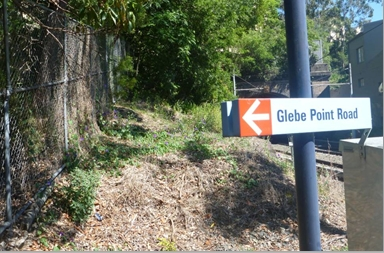 Western aspect of Glebe Light Rail Stop showing in the foreground an area that has been sprayed with defoliant and in the background large Celtis sinensis trees, a noxious weed. (image: Andrew Wood)