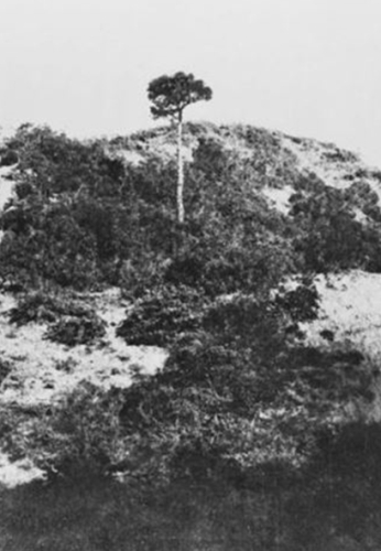 The landscape at Lone Pine before Australian soldiers charged the Turkish trenches in August 1915. (image: Australian War Memorial)